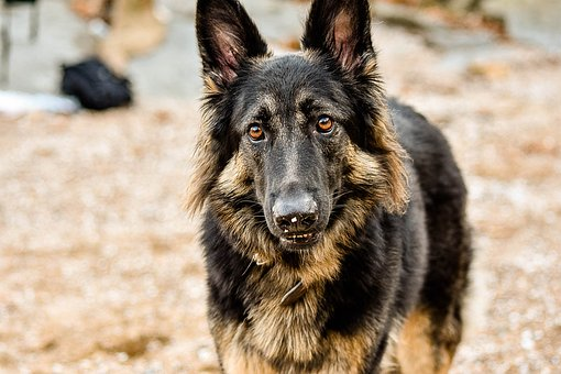 Dog, Outdoors, Pet, Animal, Puppy, Nature, Park, Breed