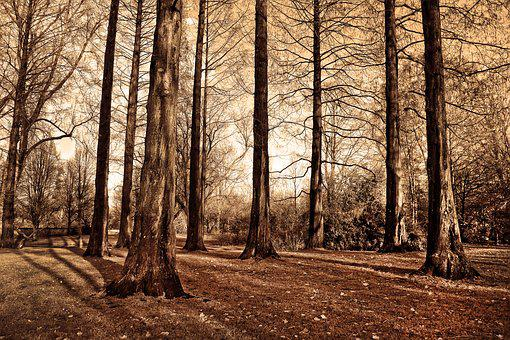 Trees, Tall Trees, Trunks, Bare Trees, Deciduous, Grove