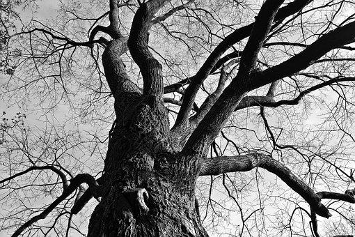 Tree, Branches, Gnarled, Twisted, Bare Tree, Deciduous
