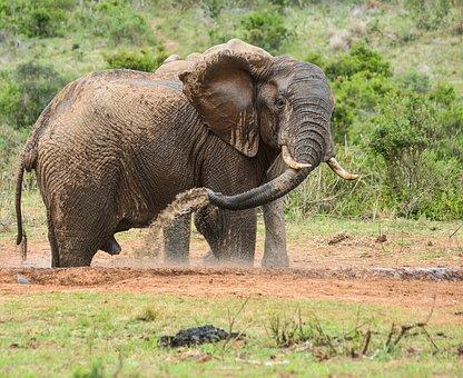 Elephant, Wildlife, Nature, Animal, Wild, Safari