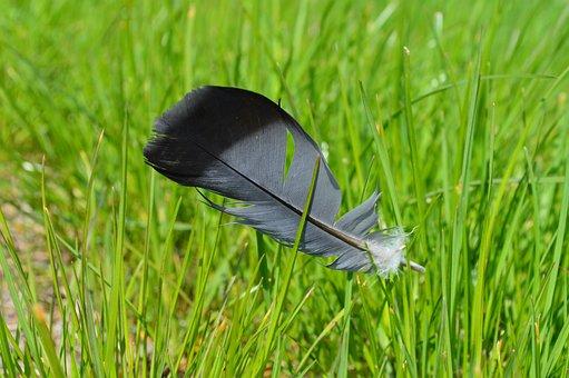 Wingtip Toys, Grass, Nature, Green Grass, Pen