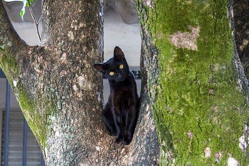 Cat, Black Cat, Black, Animal, Feline, Kitten