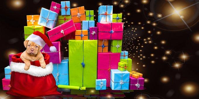 Christmas, Gifts, Dog, Christmas Dog, Santa Hat, Cap