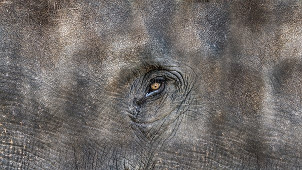 Texture, Elephant, Animal, Elephant Head