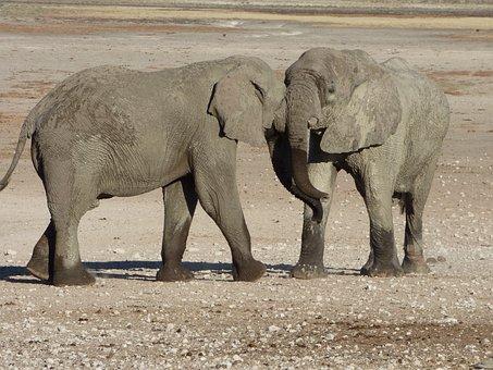 Africa, Namibia, Animals, Elephants