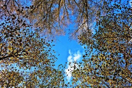 Trees, Tree Tops, Circle, Autumn Leaves, Fall Foliage