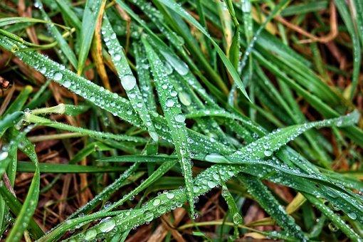 Grass, Grass Blades, Rain Drops, Water