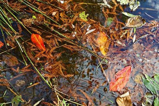 Dead Leaves, Autumn Leaves, Needles, Water, Debris
