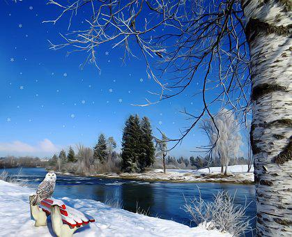 Winter, Snow, Owl, Birch, Tree, Bank, River, Red, White
