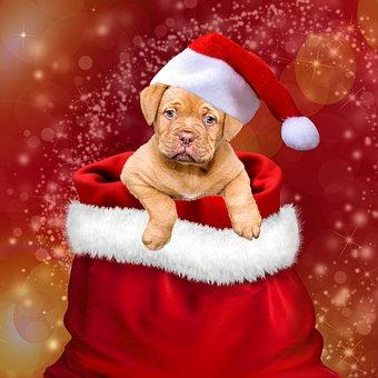 Christmas, Gifts, Dogs, Christmas Dog, Santa Hat, Cap