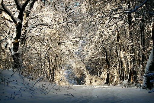Winter, Wintry, Snow, Snowy, Trees, Away