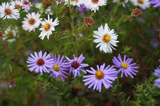 Flowers Field, Flower Bed, Greens, Flowers, Summer