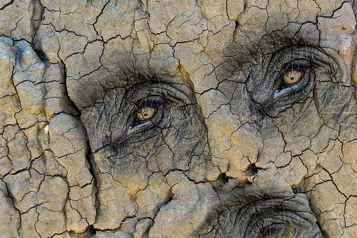 Texture, The Eye Of An Elephant, Face, Form, Features