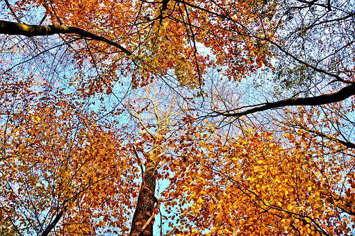 Trees, Treetops, Rising Up, Autumn Leaves, Branches