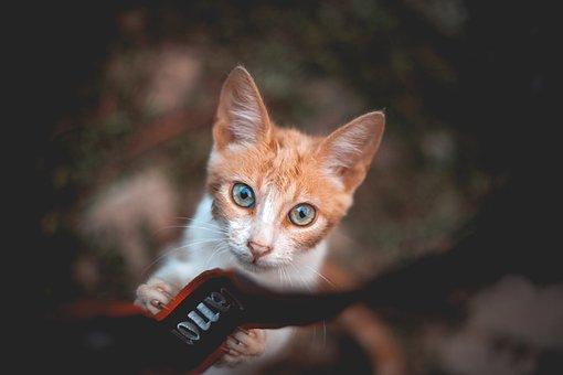 Cat, Vintage, Blue Eyes, Camera, Strap Camera, Orange