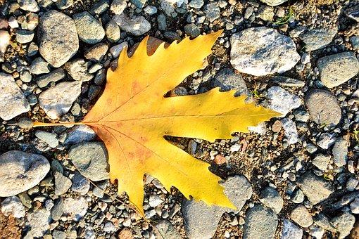 Autumn, Season, Nature, Beautiful, Outdoor, Background