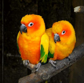 Parrots, Torque, Bird, Colorful, Animal, Feathers