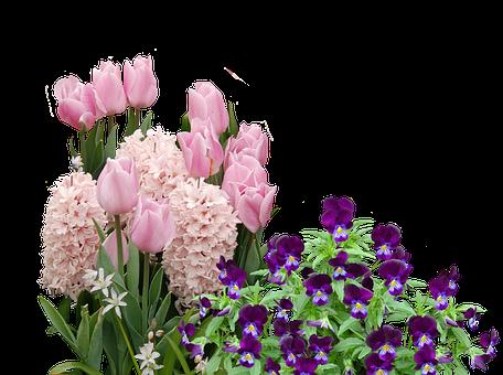 Spring, Tulips, Easter, Flower, Flowers, Spring Flower