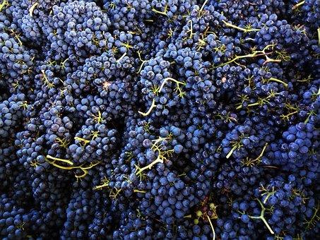 Shiraz, Grapes, Wine
