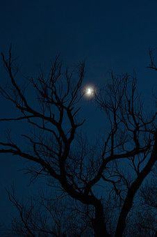 Moonshine, In The Evening, Bare, Evening Light