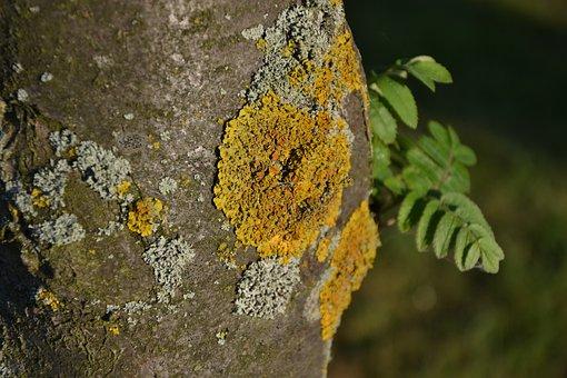 Tree, Bark, Wood, Moss, Log, Nature, Green, Tribe