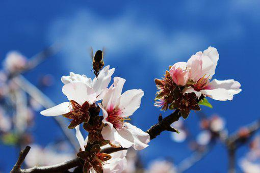 Bee, Spring, Macro, Sprinkle, Insect, Blossom, Bloom