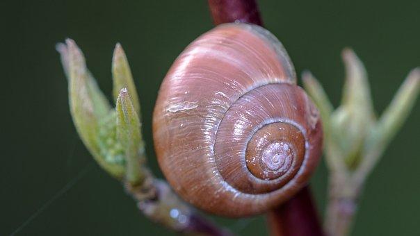 Shell, Flower, Nature, Close, Empty Snail Shell