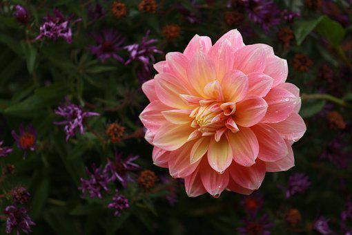 Flower, Petal, Blossom, Nature, Floral, Spring, Summer