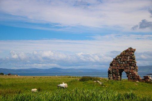 Scotland, Iona, Sheep