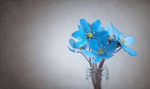 Hepatica, Blue, Flower, Blue Flower, Flowers, Tender
