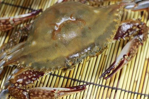 Soy Crab, Blue Crab, Fishery, Fresh, Seafood