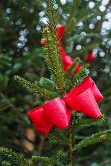 Advent, Christmas, Tannenzweig, Christmas Tree
