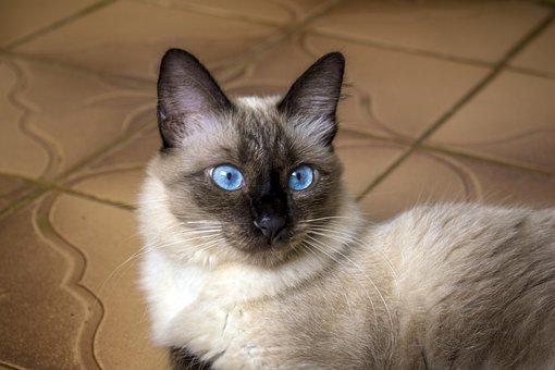 Cat, Gata, Kitten, Feline, Animal, Animals, Care Feline