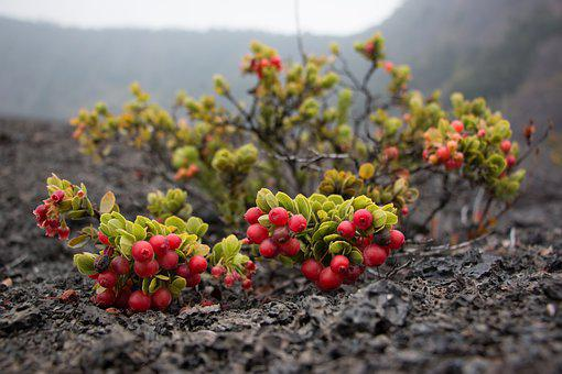 Nature, Hawaii, Tropical, Exotic, Leaf, Botanical