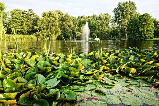 Fountain, Pond, Waterlilies, Park, Design, Landscape