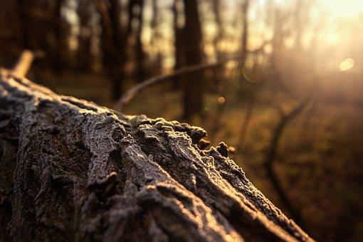 Log, Forest, Hoarfrost, Lighting, Nature