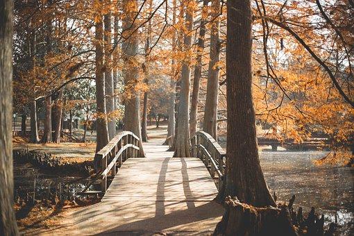 Bridge, Park, Outside, Walk, Path, Journey, Landscape