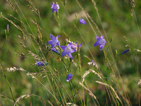 Flower, Meadow, Nature, Flowers, Bloom, Flora, Green