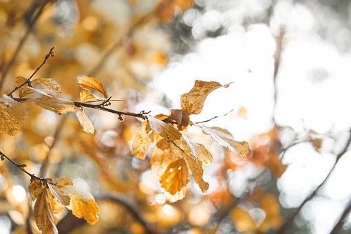 Backlight, Backlit, Leaf, Nature, Light, Sun, Sunny