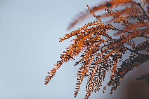 Leaf, Sun, Sky, Outside, Nature, Tree, Bright, Blue