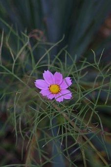 Purple Flower, Macro, Flower, Nature, Bloom, Plant