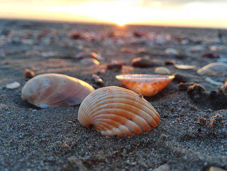 Shell, Sea, Shells, Sand, Summer, Holidays, Beach