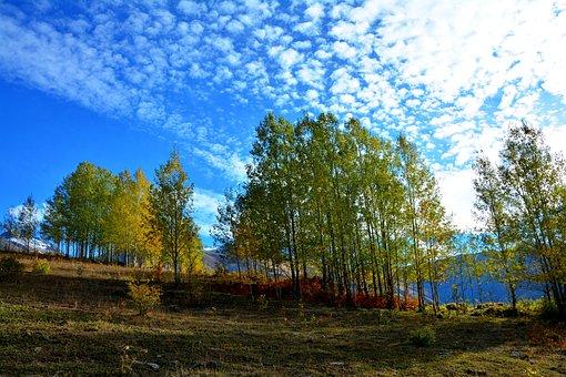 Turkey, Autumn, Season, Nature, Beautiful, Outdoor