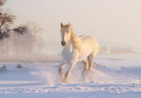 Christmas, Winter, Snow, White Horse, Xmas, Holiday