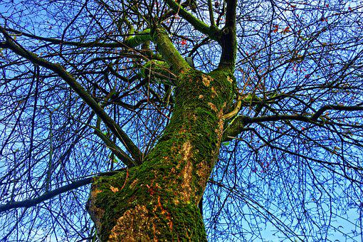 Tree Top, Trunk, Tree Trunk, Moss, Bark, Branch, Tangle