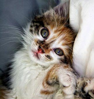 Cat, Kitten, Animals, Animal, Domestic Animal, Cute