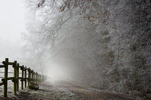 Hoarfrost, Winter, Frost, Nature, Cold, Away, On Frozen