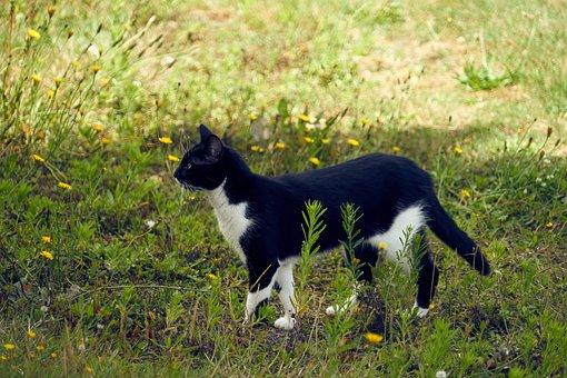 Cat, Feline, Animal, Domestic Animal, Look, Garden