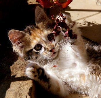 Cat, Kitten, Animals, Animal, Cat Eyes, Eyes, Cute