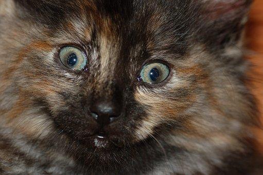 Feline, Kitten, Furry, Baby